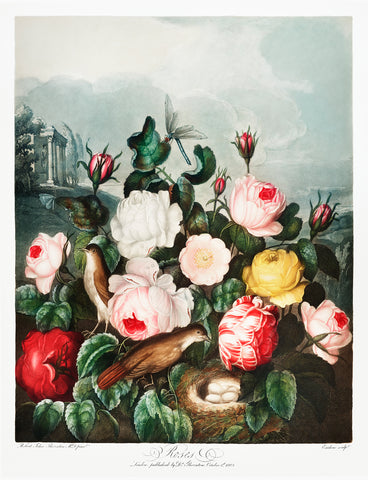 Roses, 1807 - McGaw Graphics