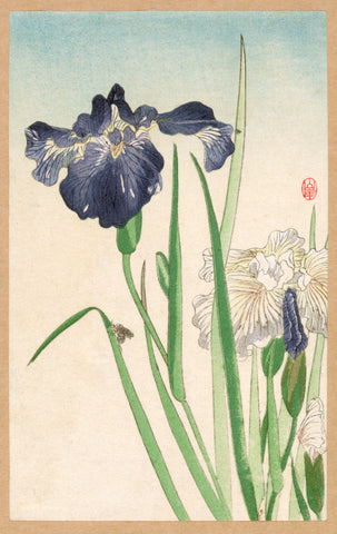 Irises -  Unknown Artist - McGaw Graphics