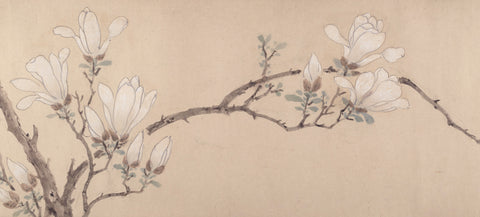 Magnolia, dated 1549 -  Unknown Artist - McGaw Graphics