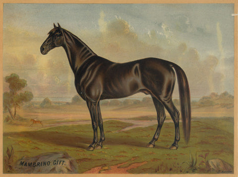 America's Renowned Stallions, c. 1876 II -  Vintage Reproduction - McGaw Graphics