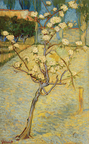 Vincent van Gogh - Small Pear Tree in Blossom, 1888
