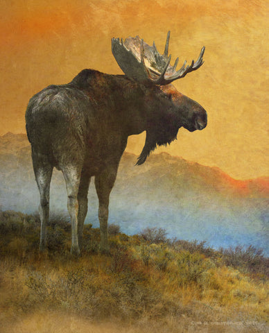 Moose Looking Back -  Chris Vest - McGaw Graphics