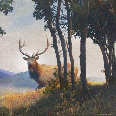 Mountain Elk I -  Chris Vest - McGaw Graphics