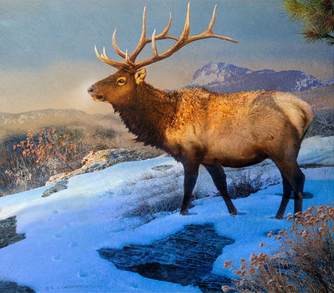 Mountain Elk II -  Chris Vest - McGaw Graphics