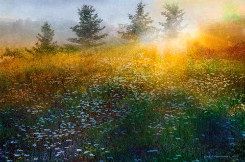 Chris Vest - Field of Daisies