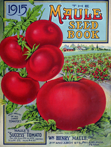 Maule Tomato, 1915 -  Vintage Sophie - McGaw Graphics