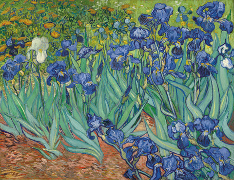 Irises in the Garden -  Vincent van Gogh - McGaw Graphics