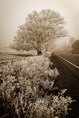Frosted Oak & Road -  David Lorenz Winston - McGaw Graphics