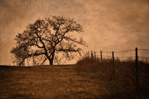 Tree and Fence II -  David Lorenz Winston - McGaw Graphics