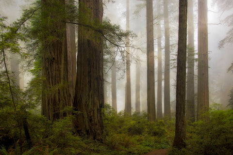 David Lorenz Winston - Del Norte Woods II