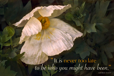 Romenya Coulteri Poppy (It is never too late...) -  David Lorenz Winston - McGaw Graphics