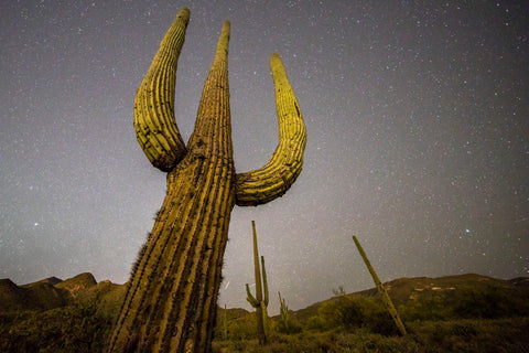 Arizona Saguaro -  Art Wolfe - McGaw Graphics