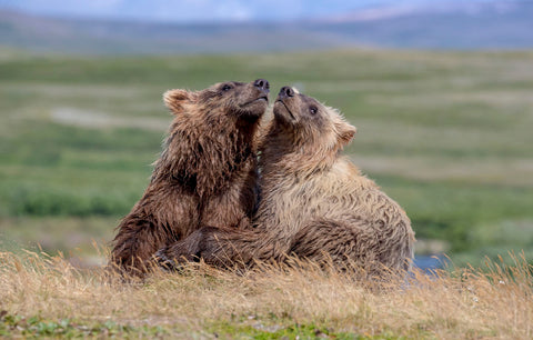 Art Wolfe - Brown Bears, Alaska