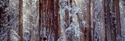 Art Wolfe - Sequoia National Park, California