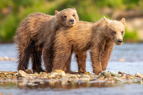 Lean on Me - Alaska Brown Bears