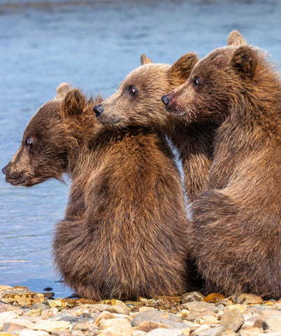 Best Buddies - Alaska Brown Bears