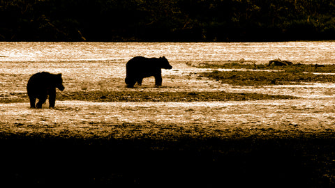 Brown Bear, Katmai National Park, Alaska (silhouette)