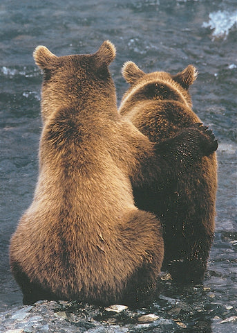 Two Bear Cubs -  Art Wolfe - McGaw Graphics