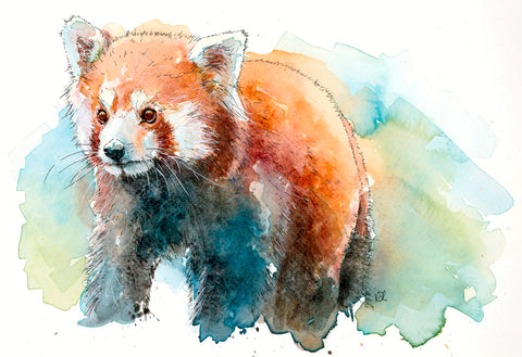 Red Panda -  Valerie de Rozarieux - McGaw Graphics