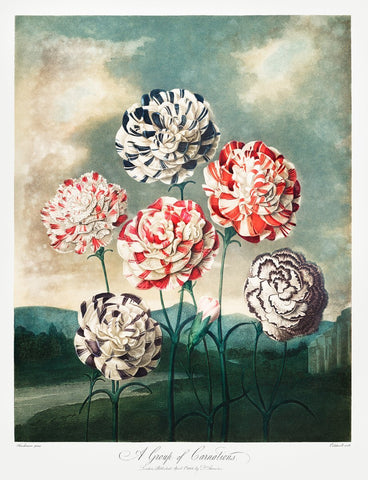 A Group of Carnations, 1807-Robert John Thornton-McGaw Graphics