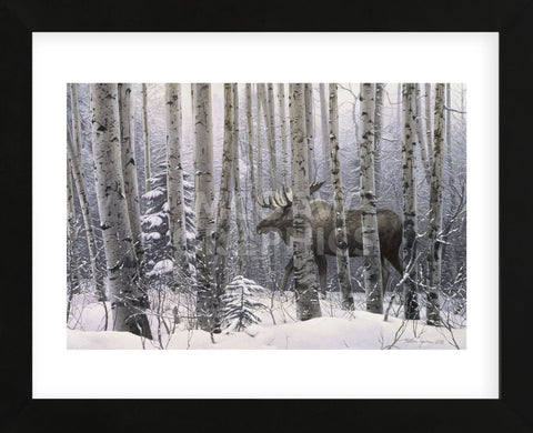 A Walk in the Woods (Framed)-Stephen Lyman-McGaw Graphics
