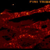 FINITRIBE - Make It Internal