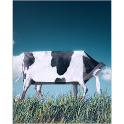 Cow Milk Fine Art Print