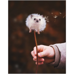 Hedgehog Fine Art Print