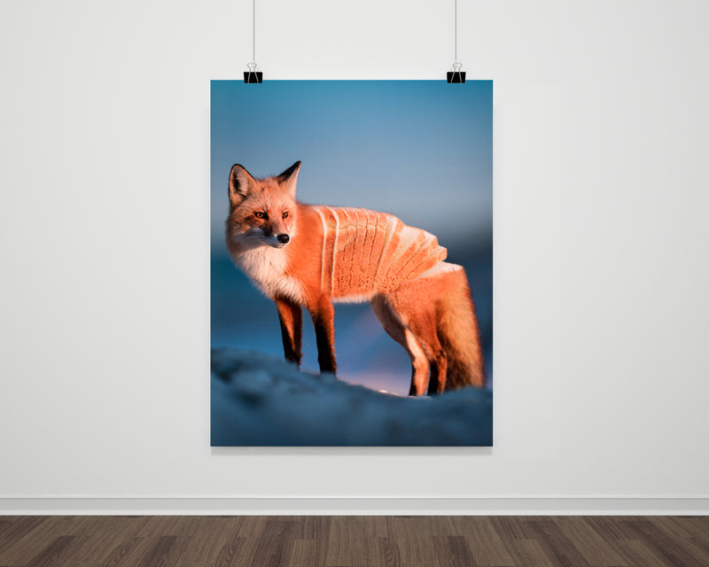 Loaf Fox Fine Art Print