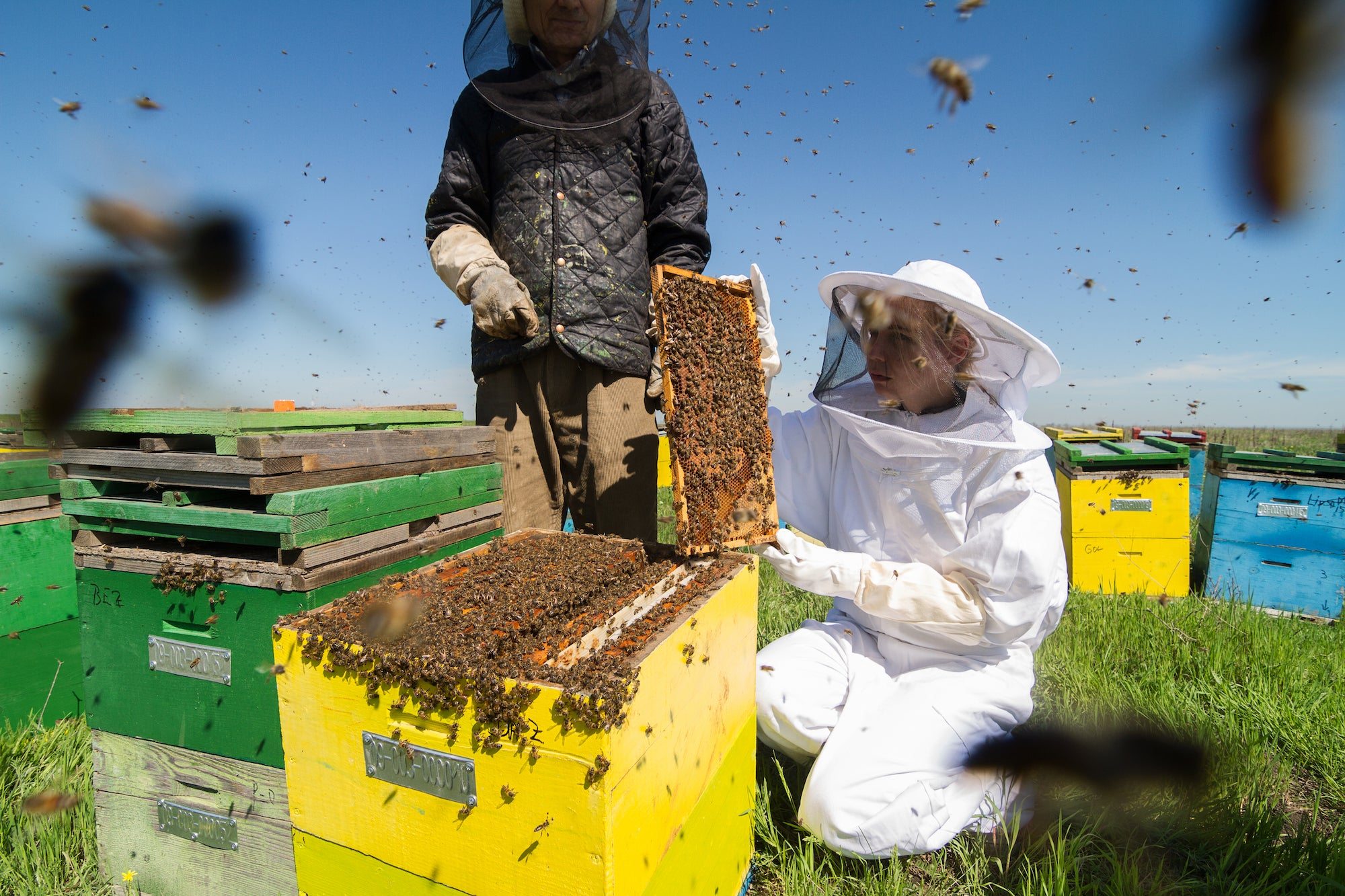 Club Fearless Test #67 Harvest honey from active bee hive