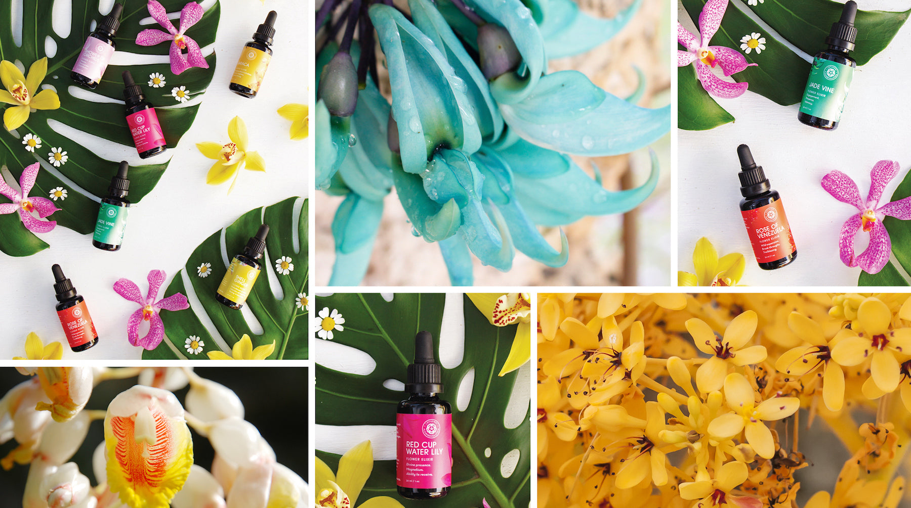 flowerevolution LOTUSWEI flower essences
