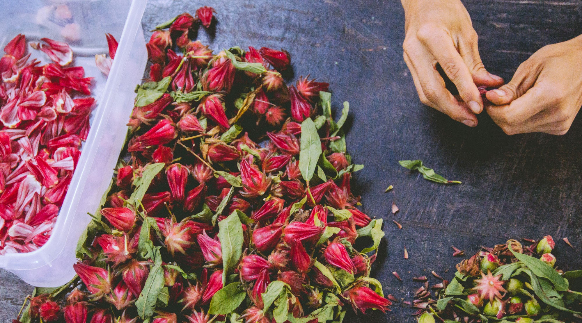 DIY: FLORAL DYEING WITH HIBISCUS PETALS