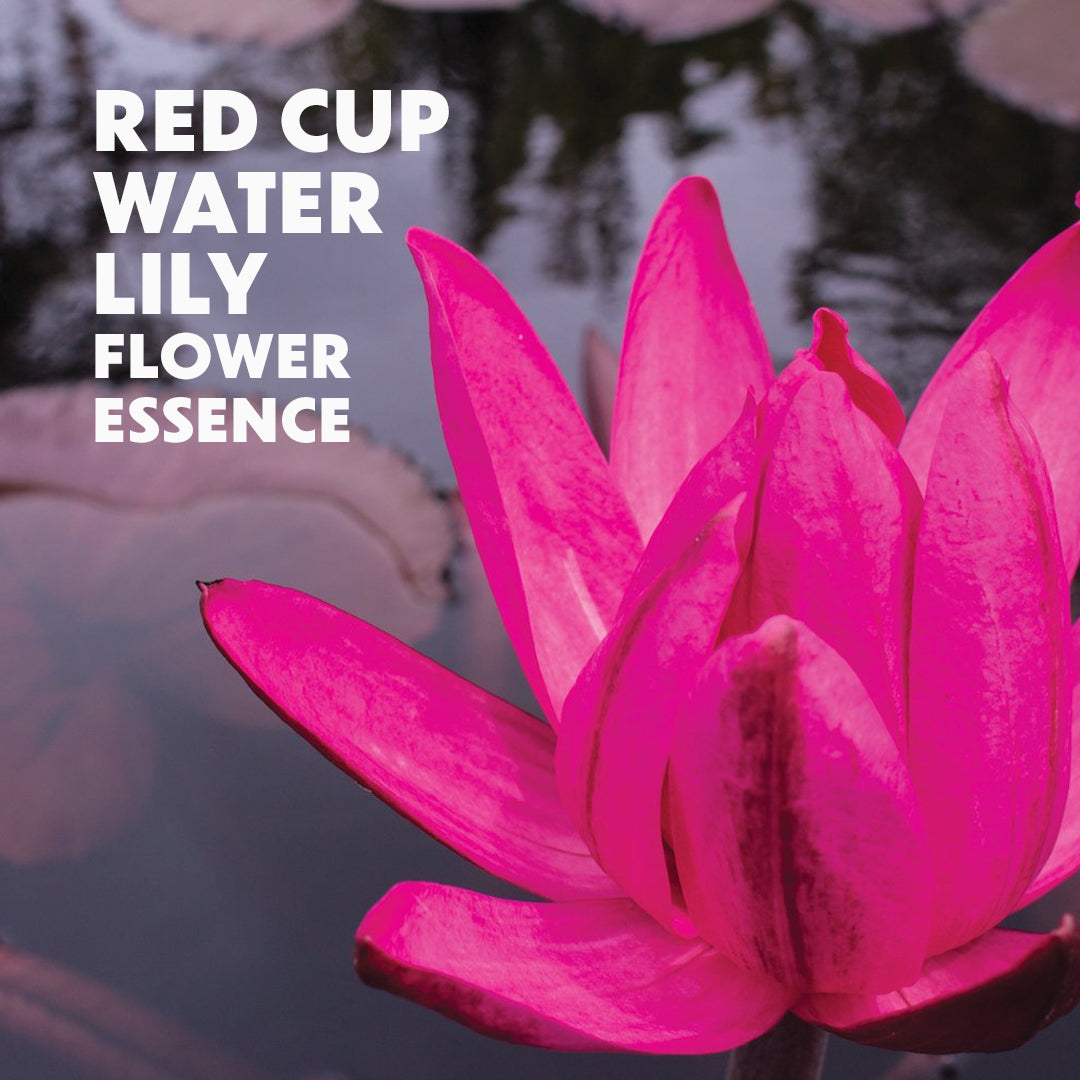Red Cup Water Lily Flower Essence