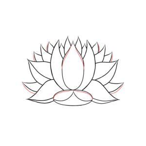 How to draw a lotus lotuswei drawing a lotus flower lotuswei flower essences mightylinksfo