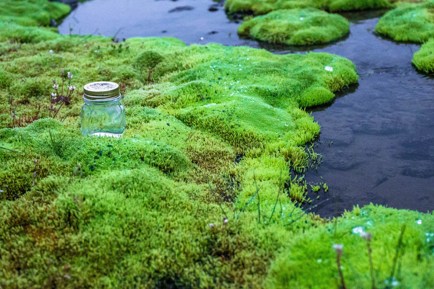 Icelandic Moss LOTUSWEI flower essences