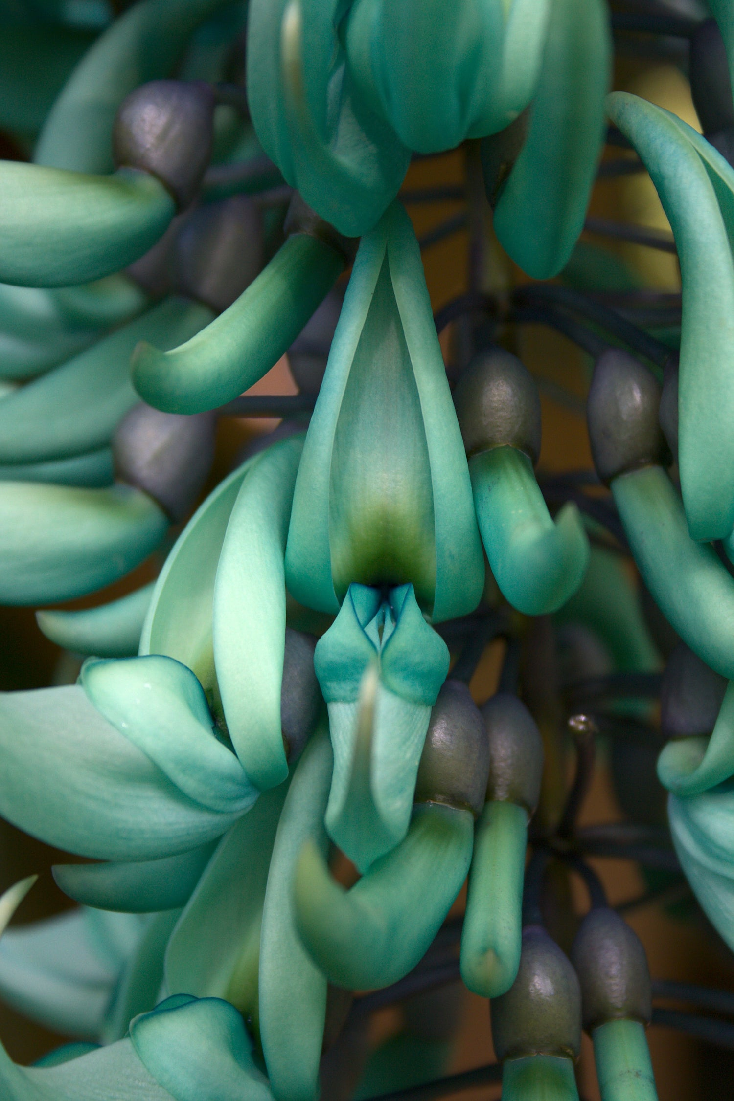 Jade Vine LOTUSWEI flower essences