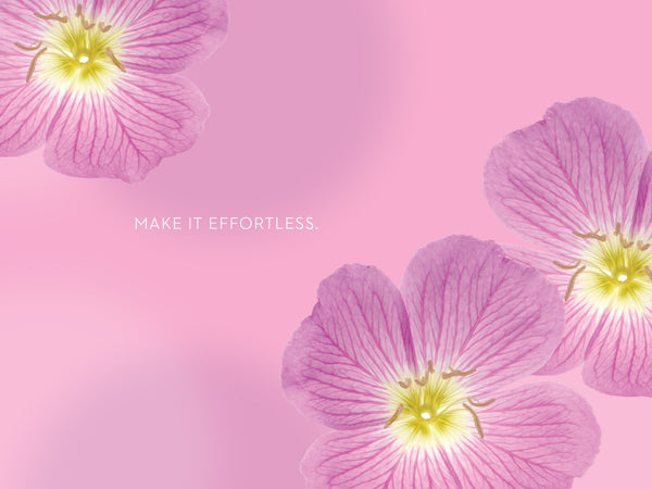 Pink Primrose Tablet Wallpaper LOTUSWEI flower essences