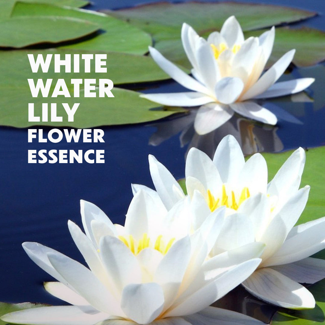 White Water Lily Flower Essence