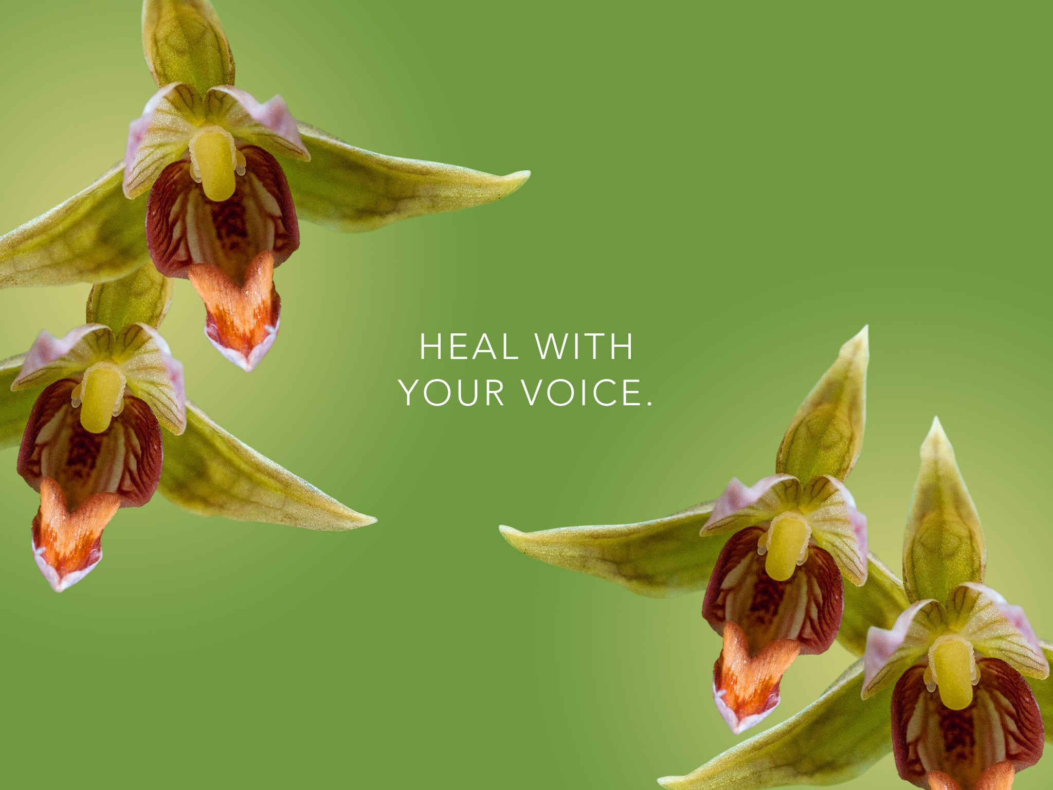 Stream Orchid Wallpaper HEAL WITH YOUR VOICE