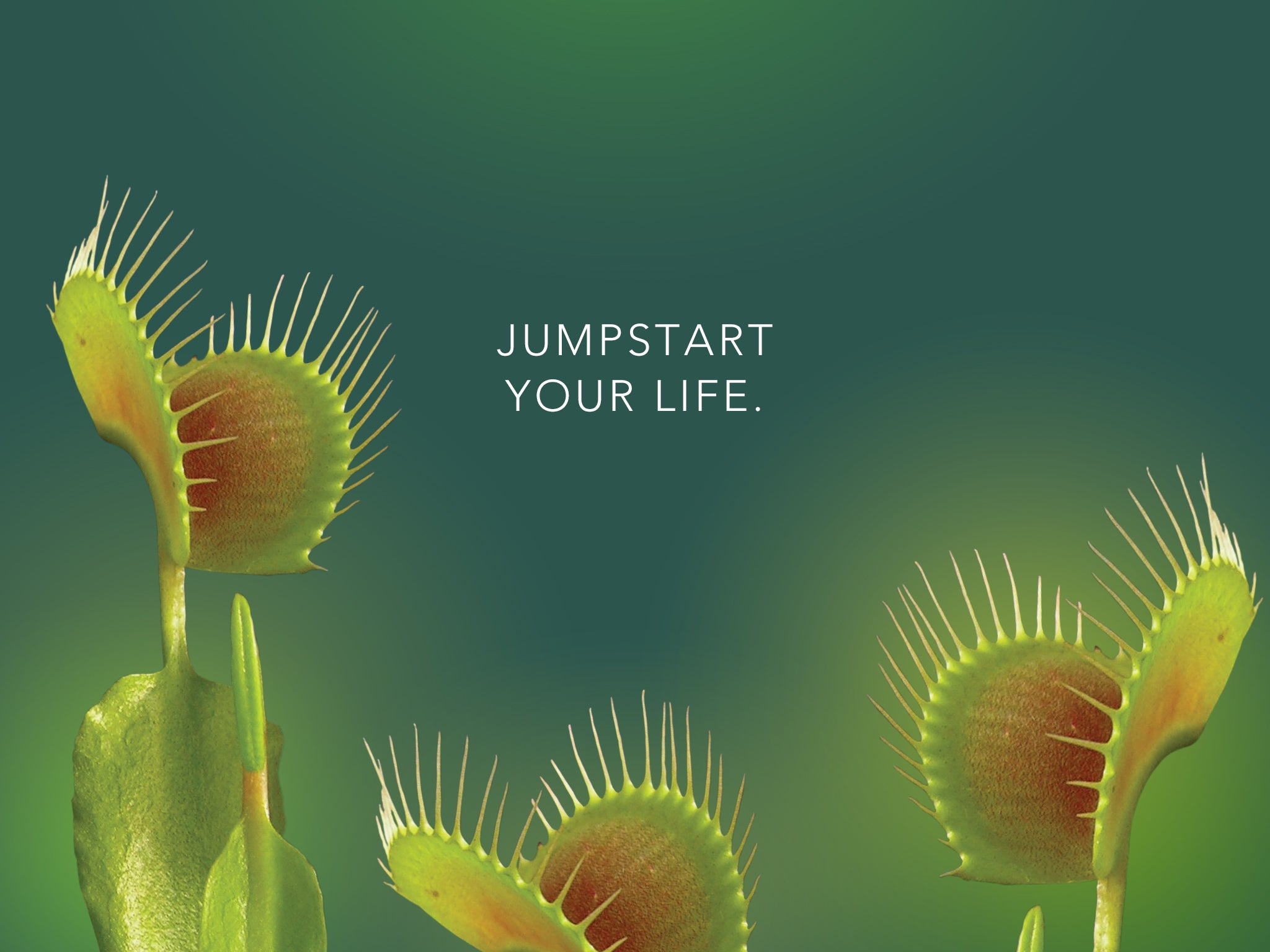 Venus Flytrap flower essence tablet wallpaper LOTUSWEI