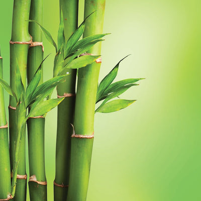 bamboo LOTUSWEI flower essences