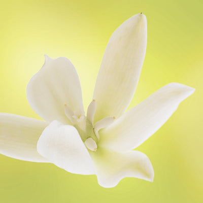 banana yucca flower LOTUSWEI flower essences