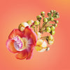 cannonball flower card LOTUSWEI flower essences