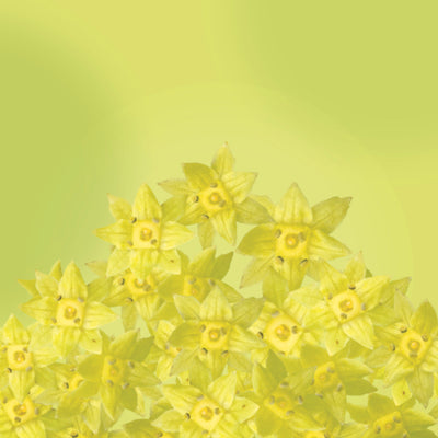 Lady's Mantle Elixir