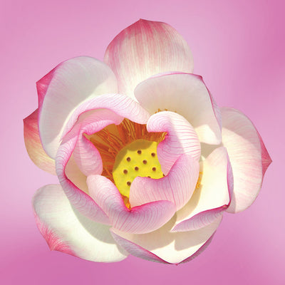 pink lotus flower essence LOTUSWEI flower essences