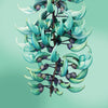 jade vine flower card LOTUSWEI flower essences