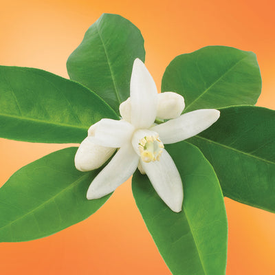 Navel Orange Blossom flower essence LOTUSWEI flower essences