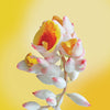shell ginger flower card LOTUSWEI flower essences