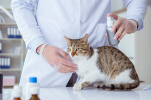 All natural flea and tick spray for cats and dogs.