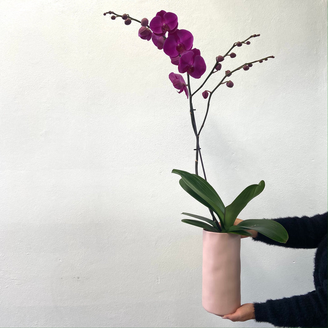 Tall Orchid Centerpiece